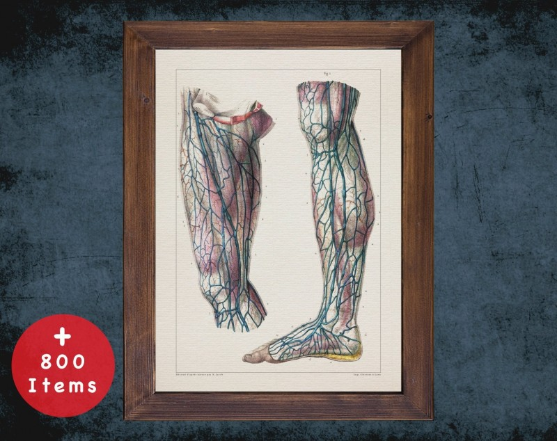 Anatomy art, ANKLE VEIN KNEE, medical student gift, Blood vessel and Vascular surgery, doctor office decor