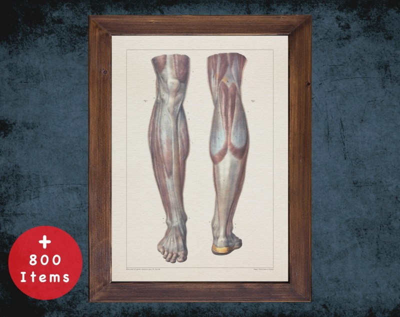 Anatomy art, LEG MUSCLE FOOT, medical student gift, Rheumatologist and Rheumatology, doctor office decor