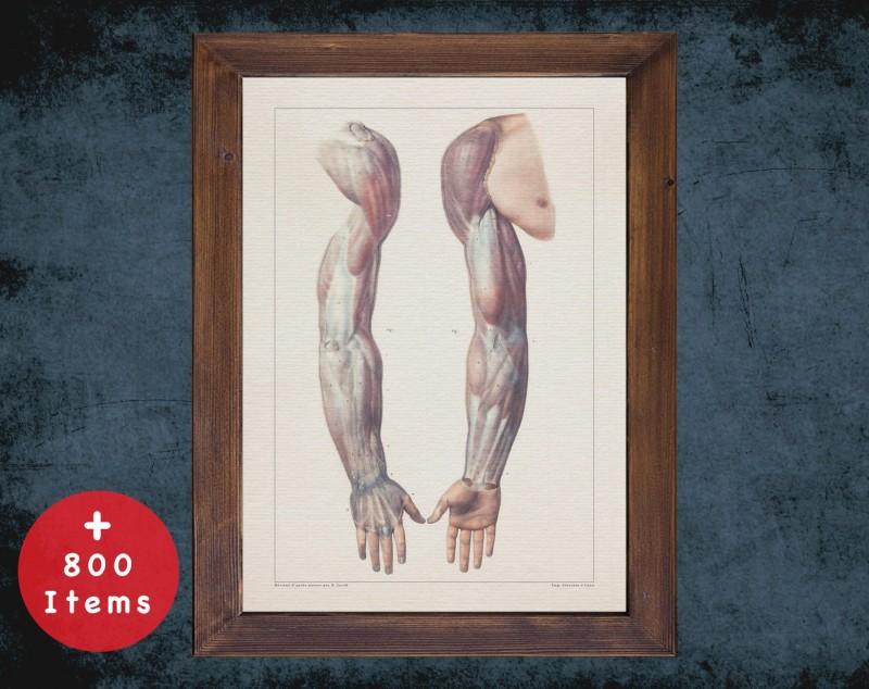 Anatomy art, ARM TENDON HAND, medical student gift, Rheumatologist and Rheumatology, doctor office decor