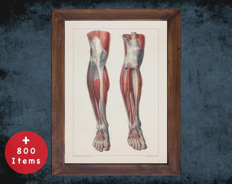 Anatomy art, KNEE TENDON FOOT, medical student gift, Rheumatologist and Rheumatology, doctor office decor