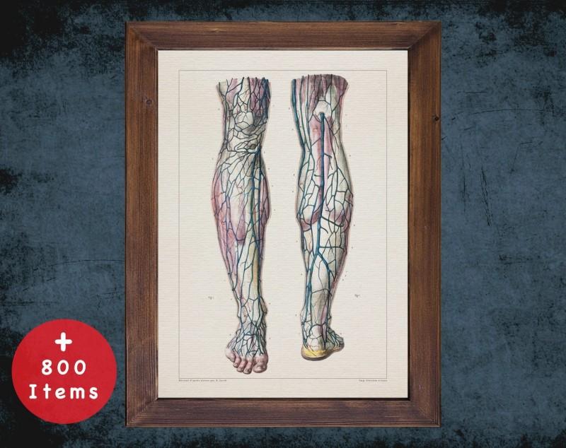 Anatomy art, SUPERFICIAL VEIN LEG, medical student gift, Vascular surgeon and Vascular surgery, doctor office decor