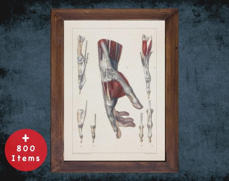 Anatomy art, HAND TENDON MUSCLE, medical student gift, Rheumatologist and Rheumatology, doctor office decor