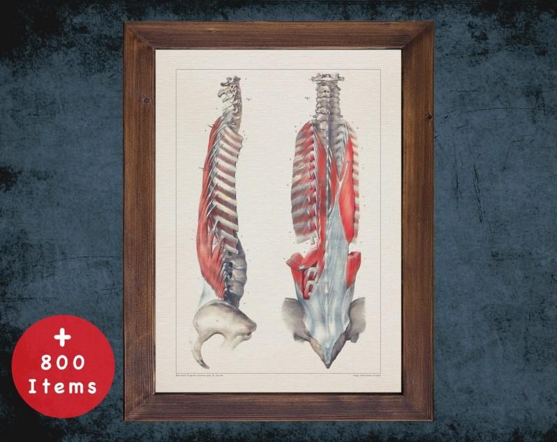 Anatomy art, SPINE BONES MUSCLE, medical student gift, Rheumatologist and Rheumatology, doctor office decor