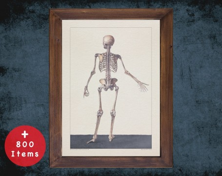 Anatomy art, SKELETON HUMAN SKELETAL, medical student gift, Radiologist and Radiology, doctor office decor
