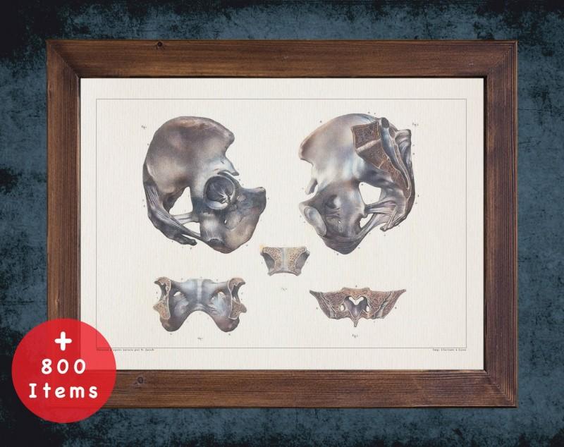 Anatomy art, PELVIS FEMUR HIP, medical student gift, Radiologist and Radiology, doctor office decor