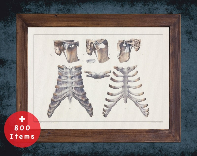 Anatomy art, STERNUM THORAX RIB, medical student gift, Radiologist and Radiology, doctor office decor