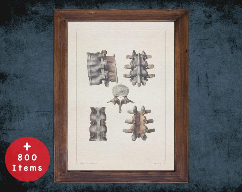Anatomy art, VERTEBRAE CERVICAL BONE, medical student gift, Radiologist and Radiology, doctor office decor