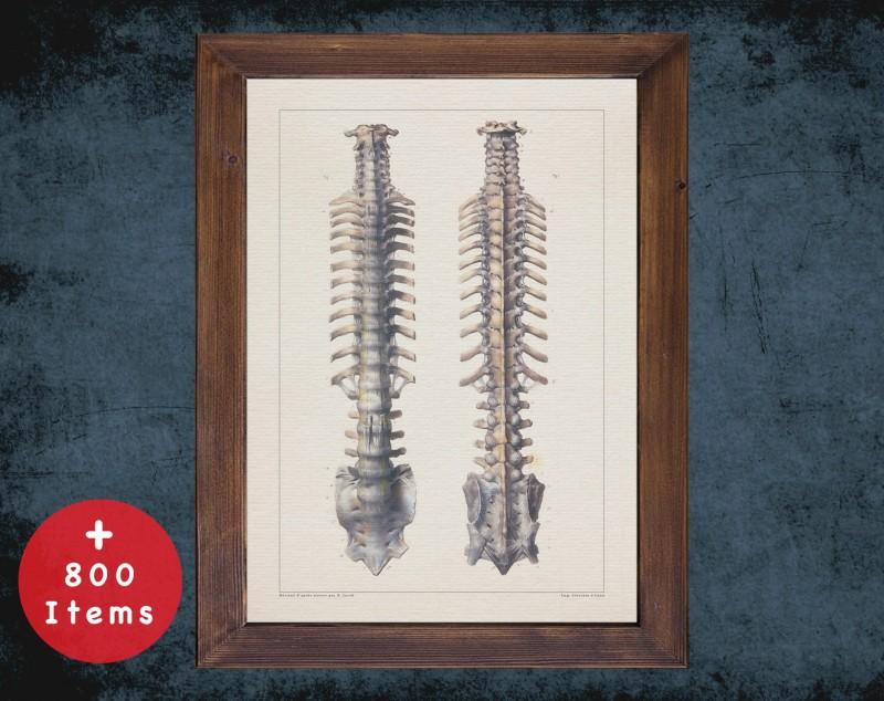 Anatomy art, VERTEBRA SPINAL VERTEBRAL, medical student gift, Radiologist and Radiology, doctor office decor