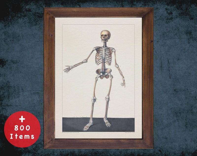 Anatomy art, BONE SKELETON BODY, medical student gift, Radiologist and Radiology, doctor office decor