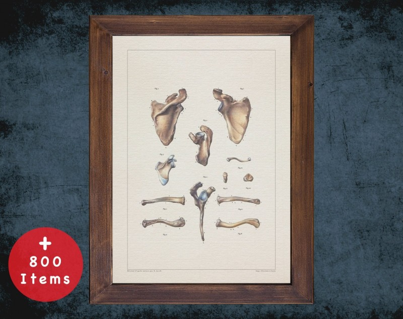Anatomy art, CLAVICLE SCAPULA BONES, medical student gift, Radiologist and Radiology, doctor office decor