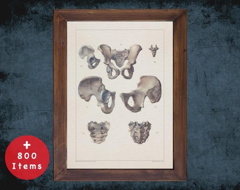 Anatomy art, PELVIS HIP SACRUM, medical student gift, Radiologist and Radiology, doctor office decor