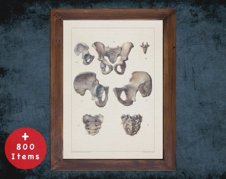 Anatomy art, PELVIS HIP SACRUM, medical student gift, Radiologist and Radiology, doctor office decor