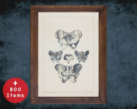 Anatomy art, PELVIS SACRUM TAILBONE, medical student gift, Radiologist and Radiology, doctor office decor