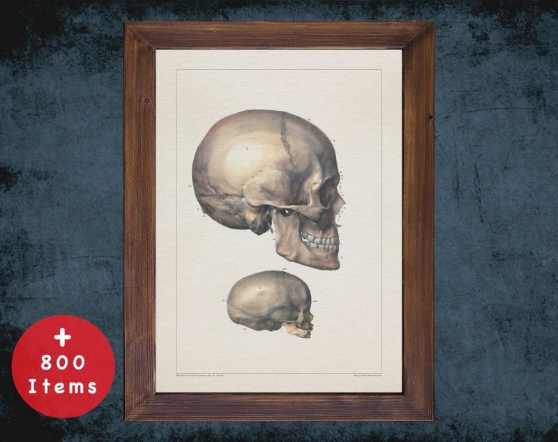 Anatomy art, SKULL MANDIBLE BONES, medical student gift, Radiologist and Radiology, doctor office decor