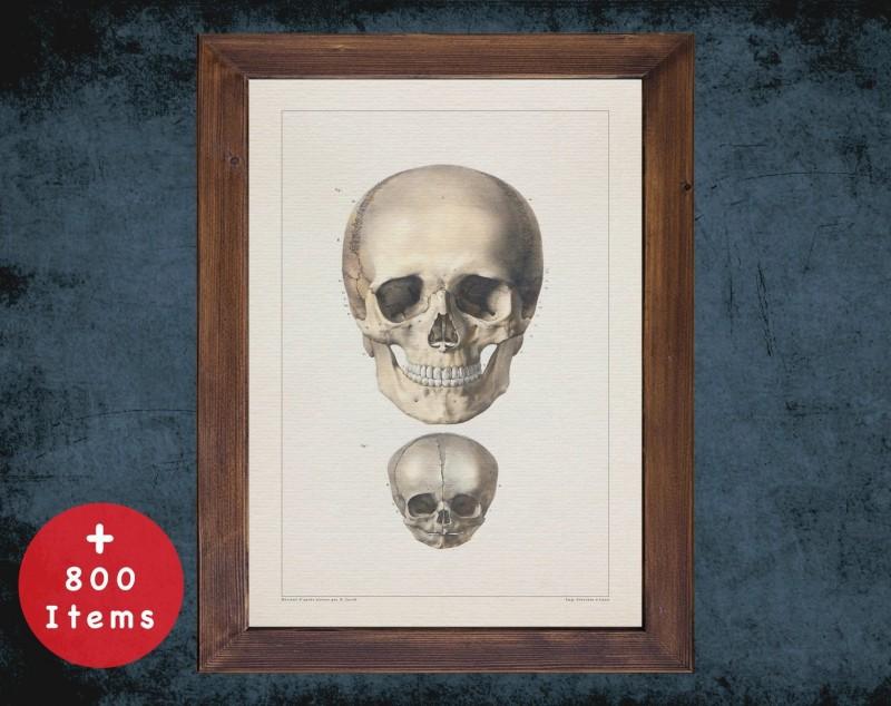 Anatomy art, SKULL HEAD BONES, medical student gift, Radiologist and Radiology, doctor office decor