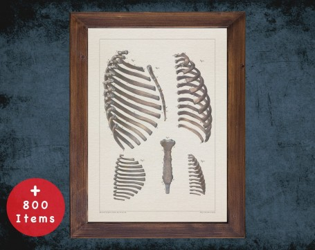 Anatomy art, STERNUM RIB CAGE, medical student gift, Radiologist and Radiology, doctor office decor