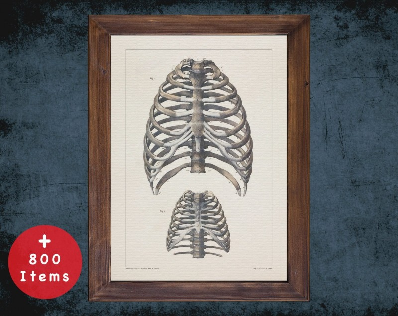 Anatomy art, RIB CAGE STERNUM, medical student gift, Radiologist and Radiology, doctor office decor
