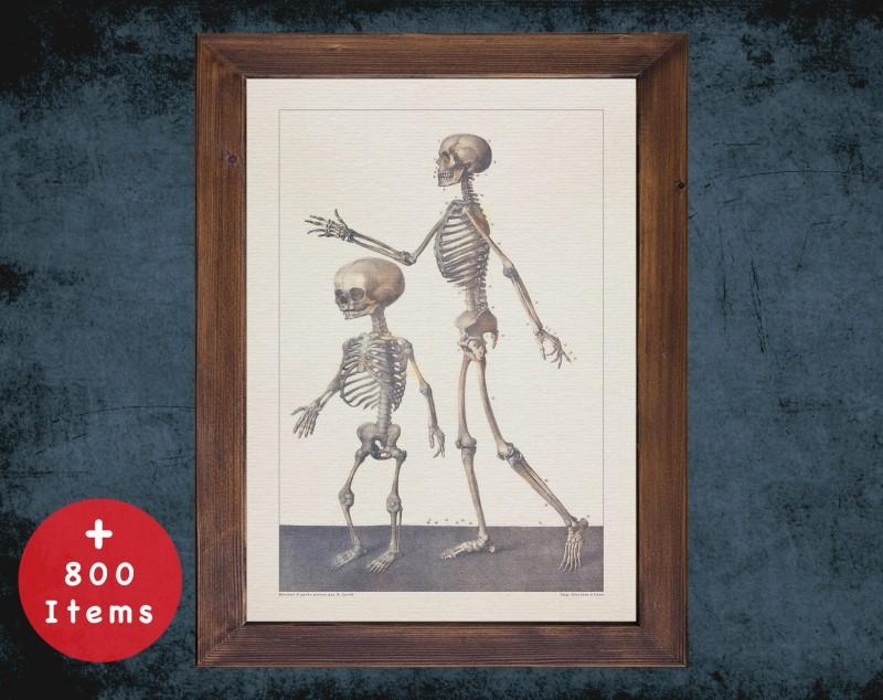 Anatomy art, CHILD SKELETON BONE, medical student gift, Radiologist and Radiology, doctor office decor