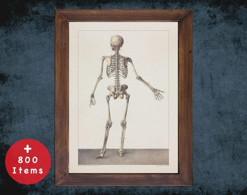 Anatomy art, HUMAN SKELETON BONE, medical student gift, Radiologist and Radiology, doctor office decor