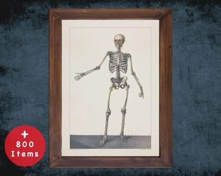 Anatomy art, HUMAN BONES SKELETON, medical student gift, Radiologist and Radiology, doctor office decor
