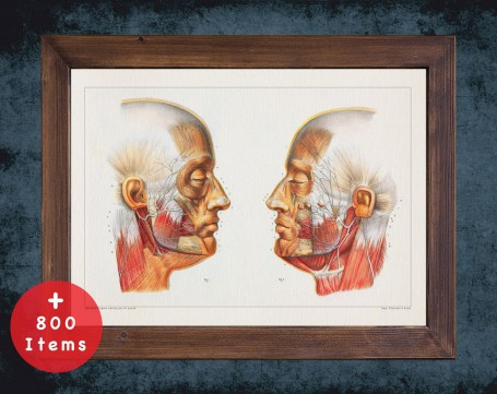 Anatomy art, HEAD JAW NERVES, medical student gift, Dentist and Dentistry, doctor office decor