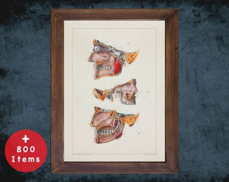 Anatomy art, HEAD MOUTH NERVES, medical student gift, Dentist and Dentistry, doctor office decor