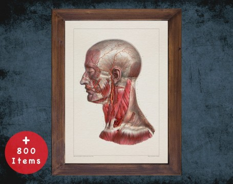 Anatomy art, HEAD MAXILLOFACIAL MUSCLE, medical student gift, Dentist and Dentistry, doctor office decor