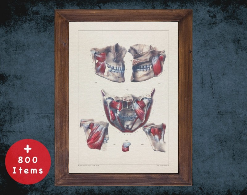 Anatomy art, TEETH MOUTH MUSCLE, medical student gift, Dentist and Dentistry, doctor office decor