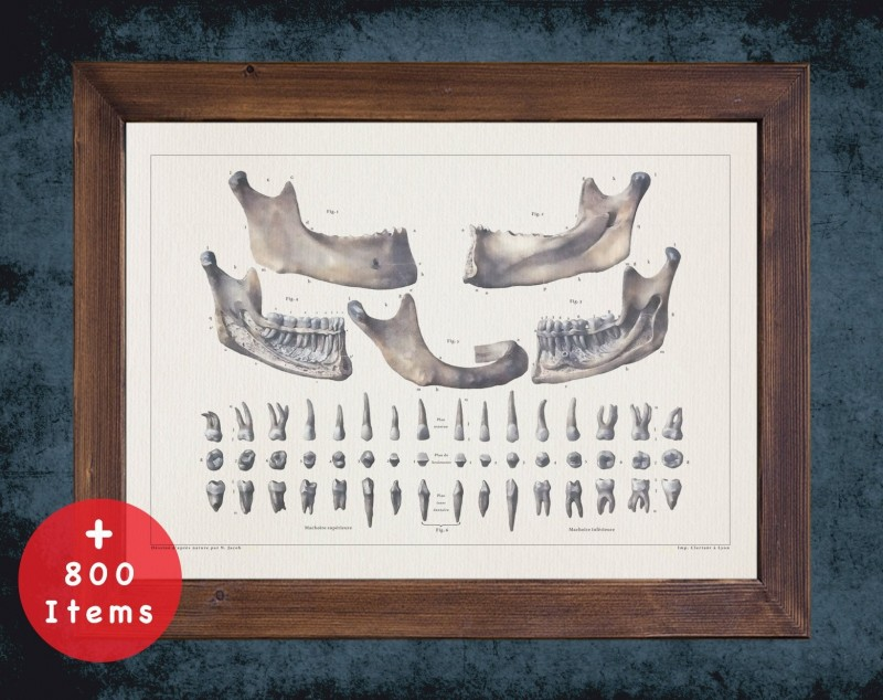 Anatomy art, TEETH MANDIBLE ROOT, medical student gift, Dentist and Dentistry, doctor office decor