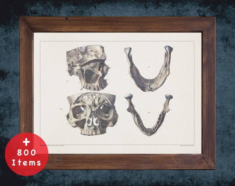 Anatomy art, JAW MANDIBLE MAXILLA, medical student gift, Dentist and Dentistry, doctor office decor