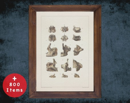 Anatomy art, JAW MANDIBLE TEETH, medical student gift, Dentist and Dentistry, doctor office decor
