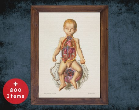 Anatomy art, CHILD BIRTH PLACENTA, medical student gift, Obstetrician and Obstetrics, doctor office decor