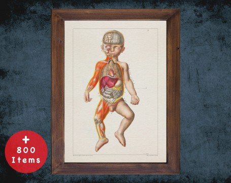 Anatomy art, CHILD BIRTH DISSECTION, medical student gift, Obstetrician and Obstetrics, doctor office decor