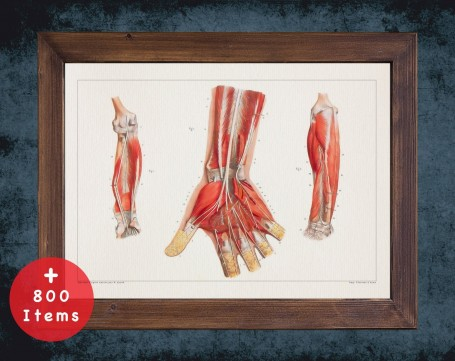 Anatomy art, HAND TENDON MUSCLE, medical student gift, hand and surgery, doctor office decor