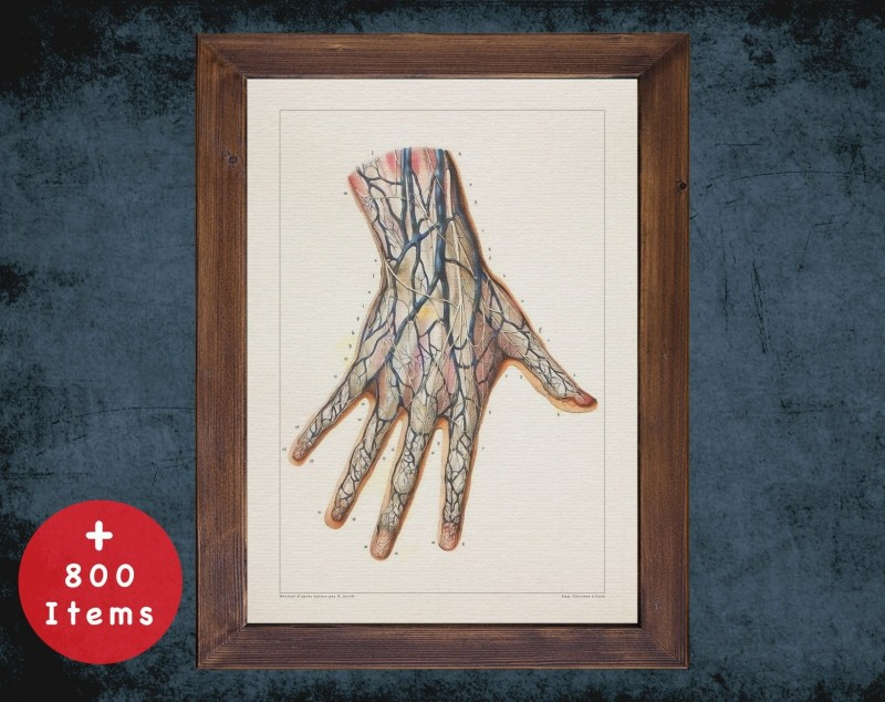 Anatomy art, HAND ARTERY FINGERS, medical student gift, hand and surgery, doctor office decor
