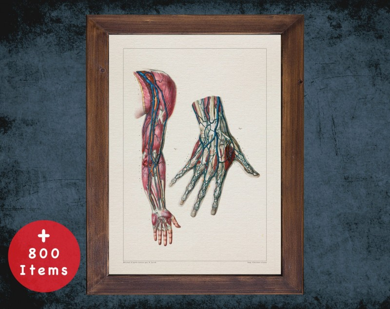 Anatomy art, ARM HAND ARTERY, medical student gift, hand and surgery, doctor office decor