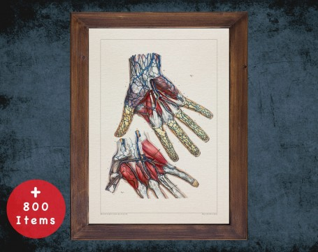 Anatomy art, HAND MUSCLE VEIN, medical student gift, hand and surgery, doctor office decor