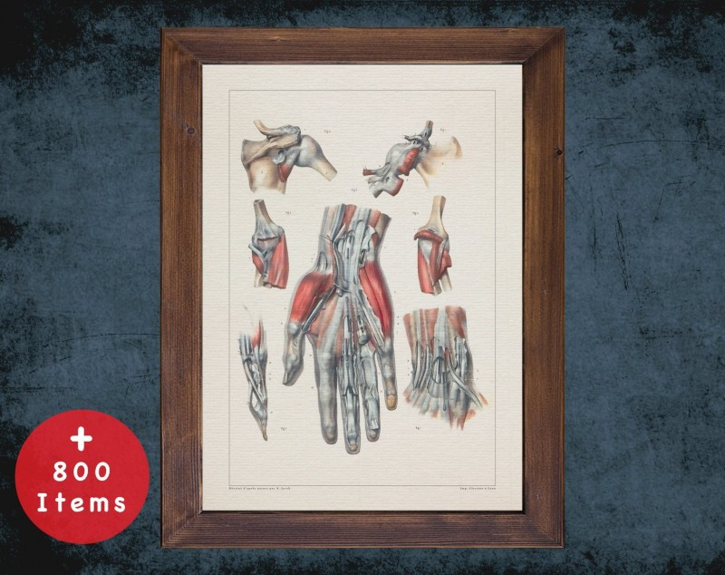 Anatomy art, SHOULDER ELBOW HAND, medical student gift, hand and surgery, doctor office decor