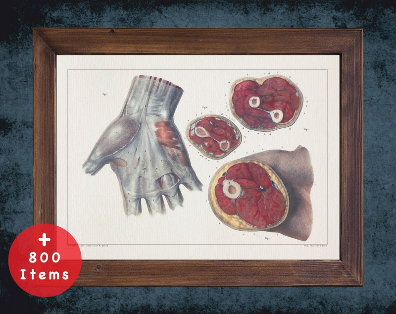 Anatomy art, HAND WRIST MUSCLE, medical student gift, hand and surgery, doctor office decor