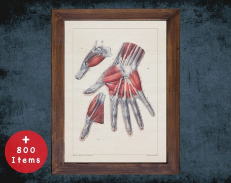 Anatomy art, HAND THUMB MUSCLE, medical student gift, hand and surgery, doctor office decor
