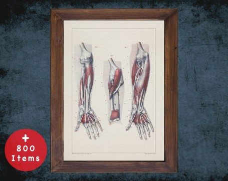 Anatomy art, FOREARM HAND ELBOW, medical student gift, hand and surgery, doctor office decor