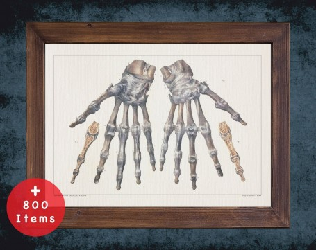 Anatomy art, HAND FINGERS BONES, medical student gift, hand and surgery, doctor office decor