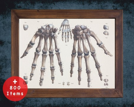 Anatomy art, HAND BONES FINGERS, medical student gift, hand and surgery, doctor office decor