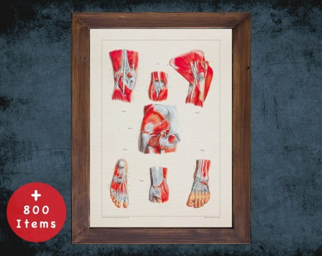 Anatomy art, FOOT KNEE TENDON, medical student gift, Podiatrist and Podiatry, doctor office decor