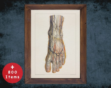 Anatomy art, FOOT VEIN ANKLE, medical student gift, Podiatrist and Podiatry, doctor office decor