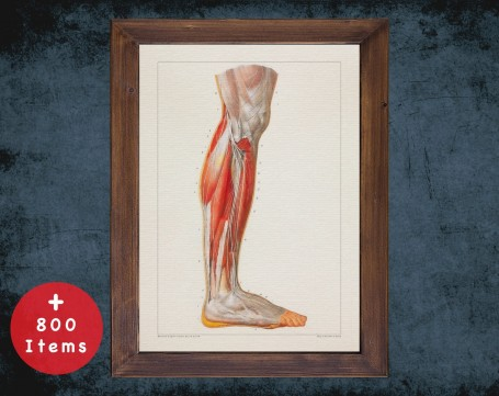 Anatomy art, HEEL KNEE TENDON, medical student gift, Podiatrist and Podiatry, doctor office decor