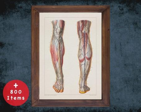 Anatomy art, HEEL KNEE VEIN, medical student gift, Podiatrist and Podiatry, doctor office decor