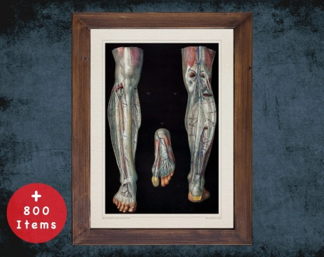 Anatomy art, FOOT ARCHES ARTERY, medical student gift, Podiatrist and Podiatry, doctor office decor