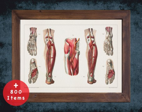 Anatomy art, FOOT KNEE ARTERY, medical student gift, Podiatrist and Podiatry, doctor office decor
