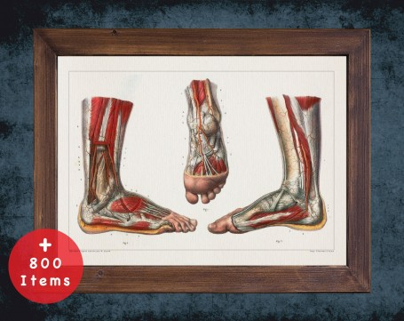 Anatomy art, FOOT VEIN HEEL, medical student gift, Podiatrist and Podiatry, doctor office decor